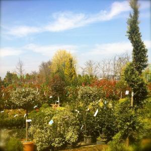 Fasoli Piante Novara Orari.Da Fasoli Piante Garden Center Sboccia La Solidarieta Con Casa